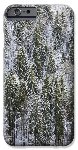 Norway iPhone Cases - Norway Spruce Picea Abies iPhone Case by Bob Gibbons