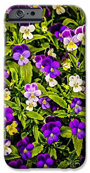 Violet Photographs iPhone Cases - Pansies iPhone Case by Elena Elisseeva