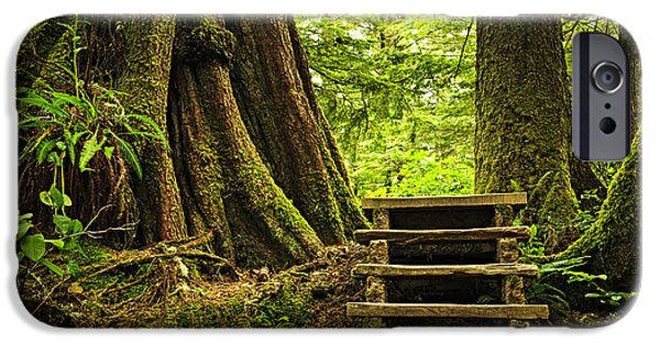 Pathway iPhone Cases - Path in temperate rainforest iPhone Case by Elena Elisseeva