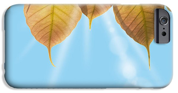 Forest Detail iPhone Cases - Pho Or Bodhi iPhone Case by Atiketta Sangasaeng