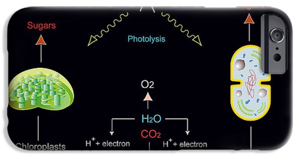 Energy Conversion iPhone Cases - Photosynthesis, Artwork iPhone Case by Francis Leroy, Biocosmos