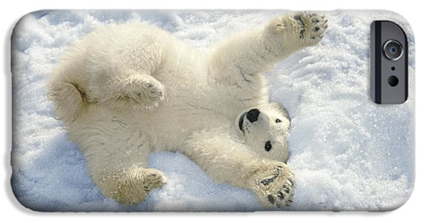 Recently Sold -  - Wintertime iPhone Cases - Polar Bear Cub Playing In Snow Alaska iPhone Case by Mark Newman