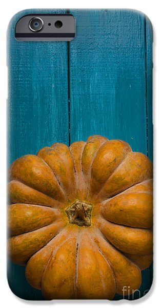 Agriculture Pyrography iPhone Cases - Pumpkin iPhone Case by Jelena Jovanovic