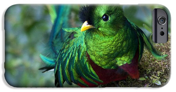 Fauna iPhone Cases - Quetzal iPhone Case by Heiko Koehrer-Wagner