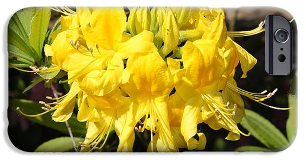 Bloosom iPhone Cases - Radiant Yellow iPhone Case by Christiane Schulze Art And Photography