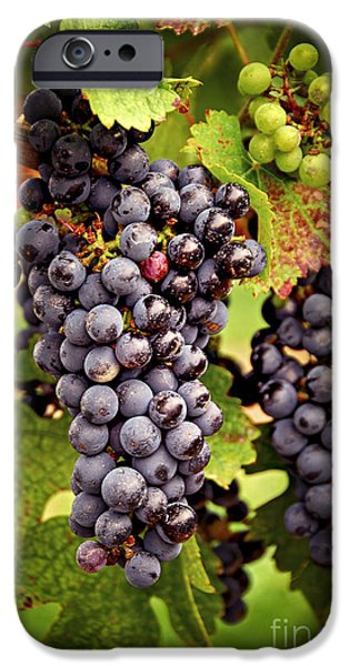 Red Wine iPhone Cases - Red grapes iPhone Case by Elena Elisseeva
