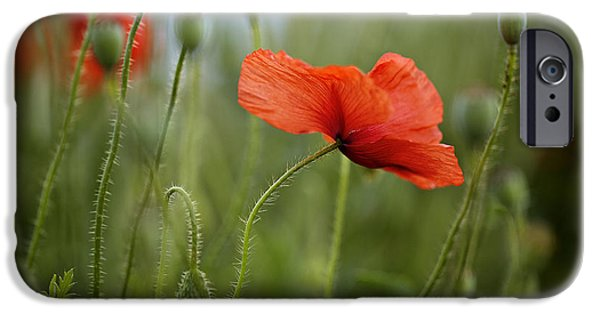 Outdoors iPhone Cases - Red Poppy Flowers iPhone Case by Nailia Schwarz