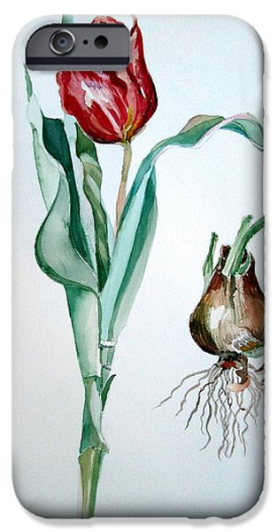 Flora Drawings iPhone Cases - Red Tulip iPhone Case by Mindy Newman