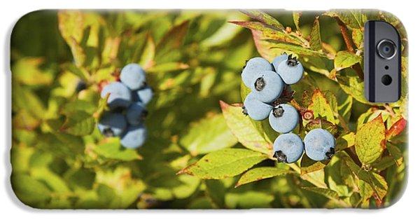 Blueberries iPhone Cases - Ripe Maine Low Bush Wild Blueberries iPhone Case by Keith Webber Jr