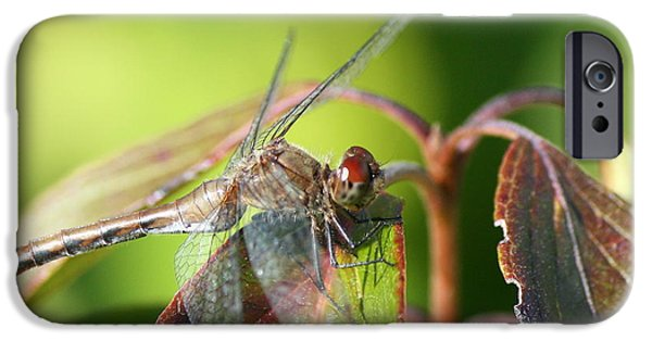 Insects iPhone Cases - September Sun iPhone Case by Neal  Eslinger