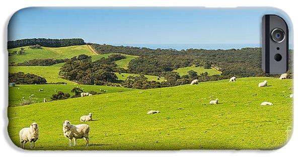 Fleurieu Peninsula iPhone Cases - Sheep iPhone Case by Tim Hester