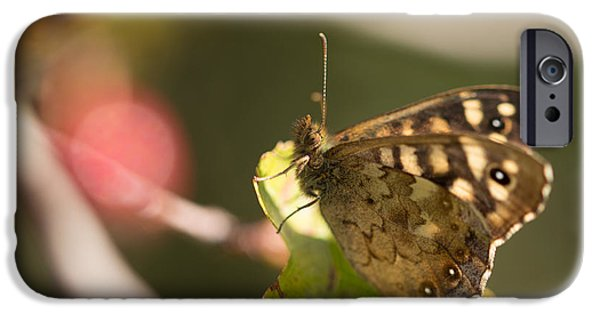Fauna iPhone Cases - Speckled Wood Butterfly iPhone Case by Robert Carr