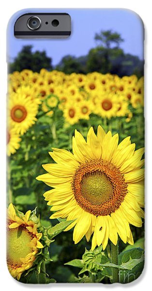 Field Photographs iPhone Cases - Sunflower field iPhone Case by Elena Elisseeva