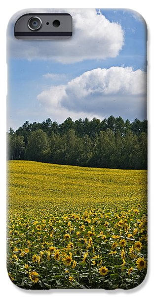 Rural Photographs iPhone Cases - Sunflowers iPhone Case by Jason KS Leung
