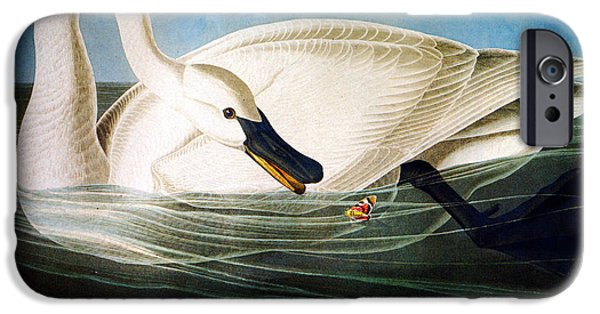 Wild Life Drawings iPhone Cases - Trumpeter Swan iPhone Case by Celestial Images