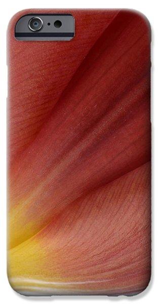 Tulip iPhone Case by Mark Johnson
