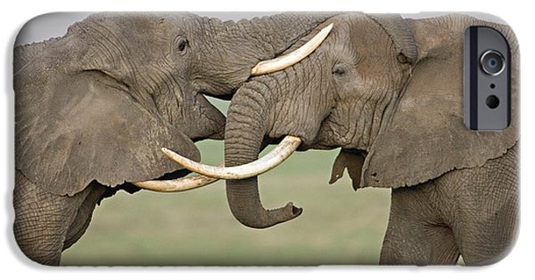 Elephants iPhone Cases - Two African Elephants Fighting iPhone Case by Panoramic Images