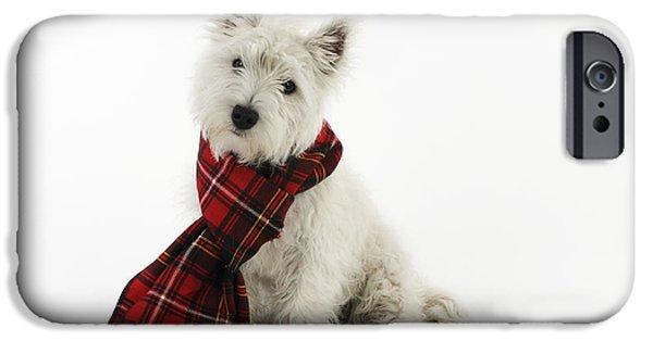Scottish Terrier Puppy iPhone Cases - West Highland White Terrier Puppy iPhone Case by John Daniels