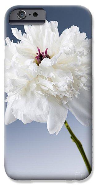 Peony iPhone Cases - White peony flower iPhone Case by Elena Elisseeva