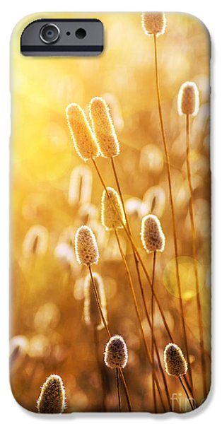Crops iPhone Cases - Wild Spikes iPhone Case by Carlos Caetano