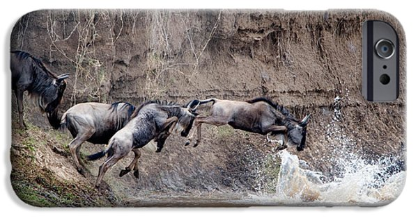 Masai Mara Photographs iPhone Cases - Wildebeests Crossing A River, Mara iPhone Case by Panoramic Images