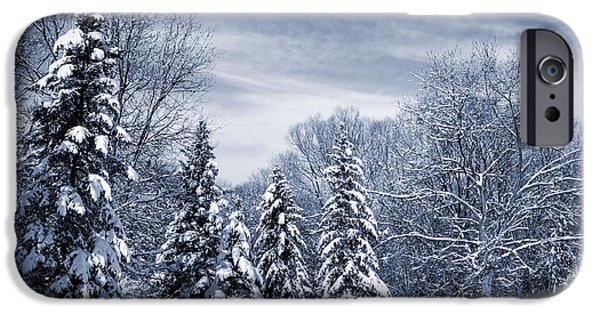 Winter Weather iPhone Cases - Winter forest iPhone Case by Elena Elisseeva