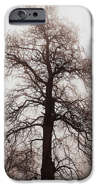 Snowy iPhone Cases - Winter tree in fog iPhone Case by Elena Elisseeva