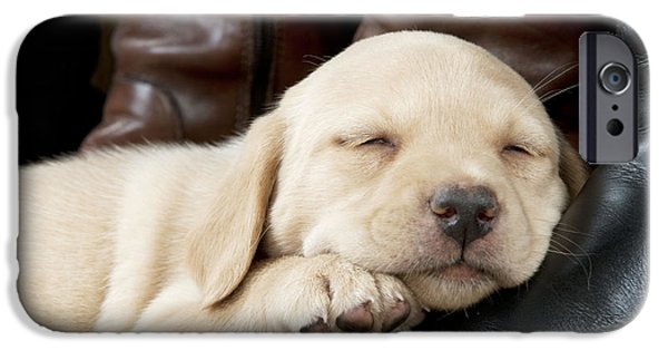 Innocence iPhone Cases - Yellow Lab Puppy Dog iPhone Case by John Daniels