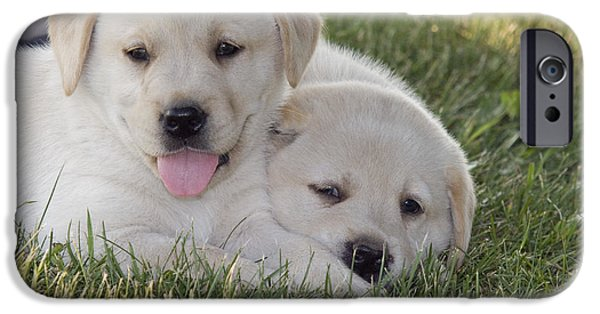 Cute Puppy iPhone Cases - Yellow Labrador Retriever Puppies iPhone Case by Linda Freshwaters Arndt
