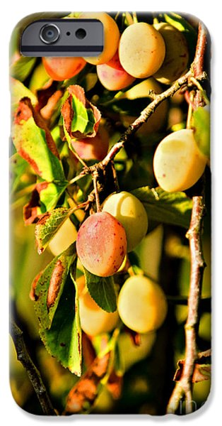 Crops iPhone Cases - Yellow Plums iPhone Case by Dan Radi