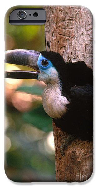 Toucan iPhone Cases - Yellow-ridged Toucan iPhone Case by Art Wolfe