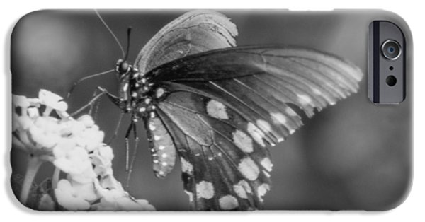 Flight iPhone Cases - Pfft iPhone Case by Marit Runyon