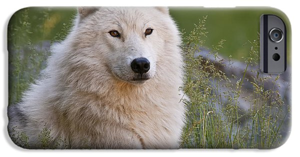 Loup Photos iPhone Cases - Arctic Wolf iPhone Case by Wolves Only