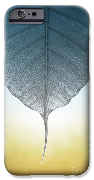 Nature Abstract iPhone Cases - Pho Or Bodhi iPhone Case by Atiketta Sangasaeng