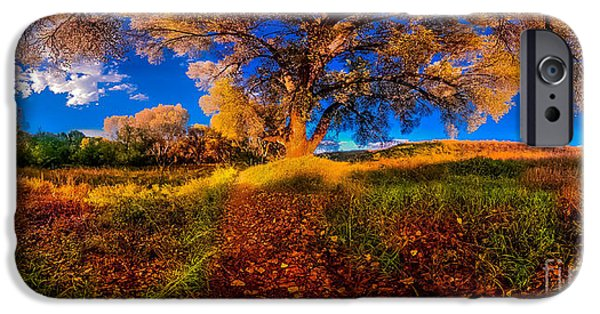 Prescott iPhone Cases - 360 Under A Tree iPhone Case by Stephen Schwartzengraber