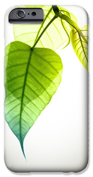Recently Sold -  - Summer iPhone Cases - Pho Or Bodhi iPhone Case by Atiketta Sangasaeng