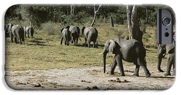Fauna iPhone Cases - African Elephants Loxodonta Africana iPhone Case by Panoramic Images