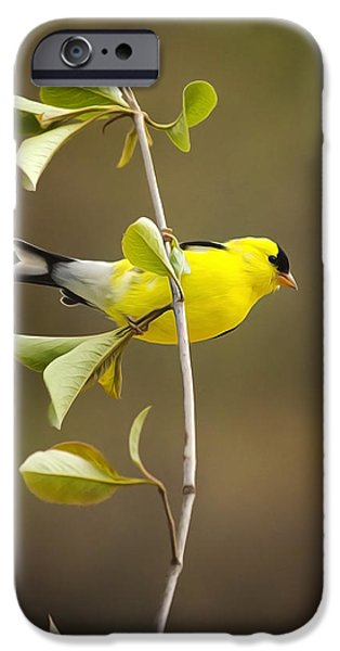 Finch iPhone Cases - American Goldfinch iPhone Case by Christina Rollo