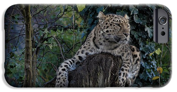 Wwf iPhone Cases - Amur Leopard iPhone Case by Martin Newman