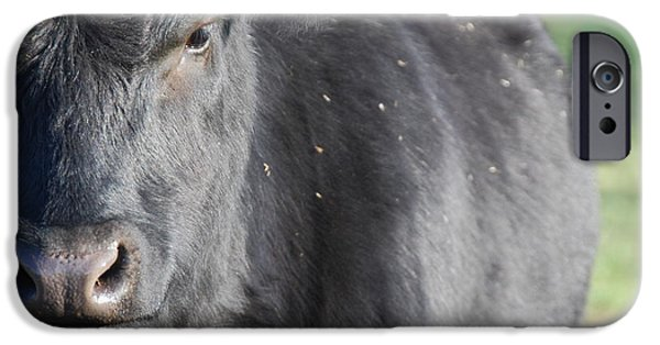 Black Dog iPhone Cases - Angus Heifer iPhone Case by Thea Wolff