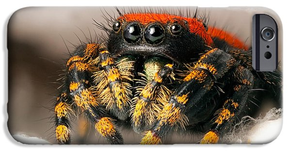 Jumping Spiders iPhone Cases - Apache Jumping Spider iPhone Case by Scott Linstead