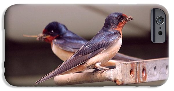 Barn Swallow iPhone Cases - Barn Swallows Constructing Their Nest iPhone Case by J McCombie