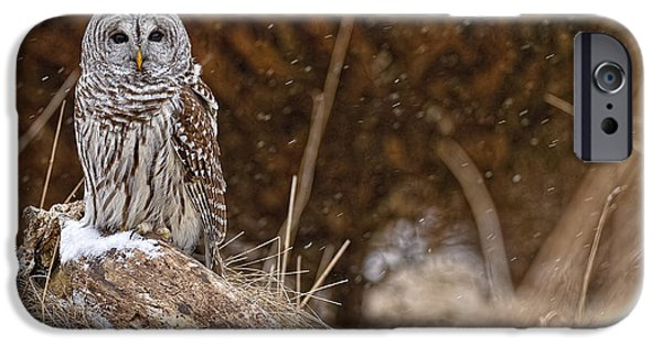 Animals Photographs iPhone Cases - Barred Owl iPhone Case by Owl Images