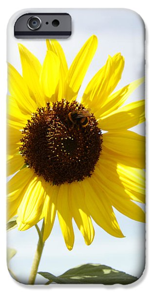 Pollinate iPhone Cases - Bee on flower iPhone Case by Les Cunliffe