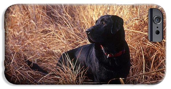 Domesticated Animals iPhone Cases - Black Labrador Retriever iPhone Case by William H. Mullins