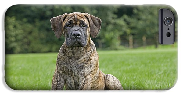 Thinking iPhone Cases - Boerboel Puppy Dog iPhone Case by Johan De Meester