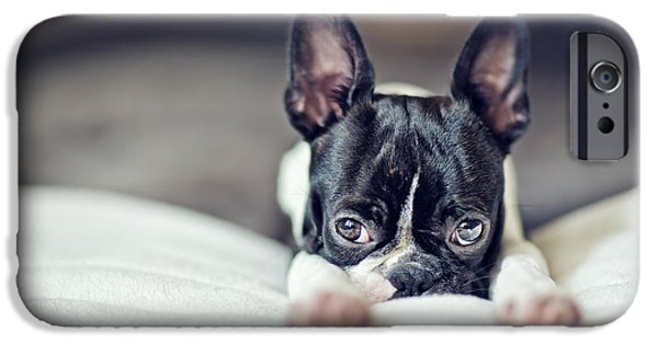 Cute Photographs iPhone Cases - Boston Terrier Puppy iPhone Case by Nailia Schwarz