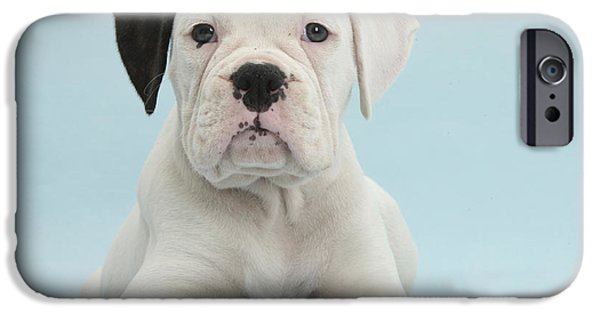 Cute Puppy iPhone Cases - Boxer Puppy iPhone Case by Mark Taylor