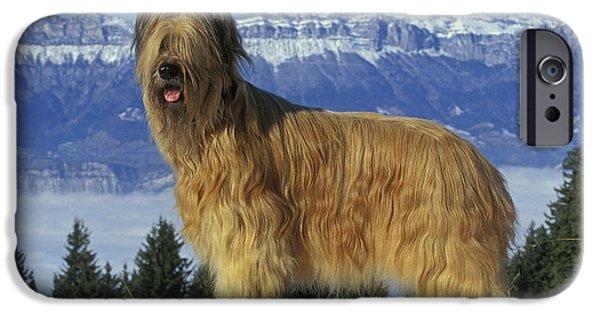 Dog In Snow iPhone Cases - Briard Dog iPhone Case by Jean-Michel Labat