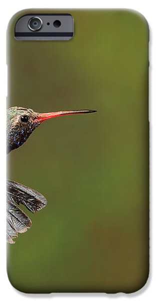 Broad Billed Hummingbird iPhone Case by Scott Linstead